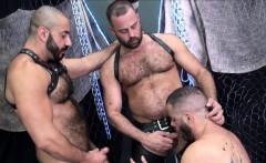 Bareback threeway bear ass toyed after trio